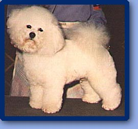 Toto at show-1 year old